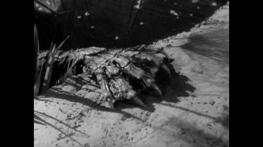 DH Crew Picks their Top 5 Horror Movies :: Blog :: Dark